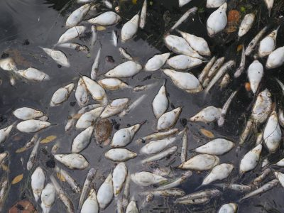 Fish Kill in Biscayne Bay: A Report and a Plan