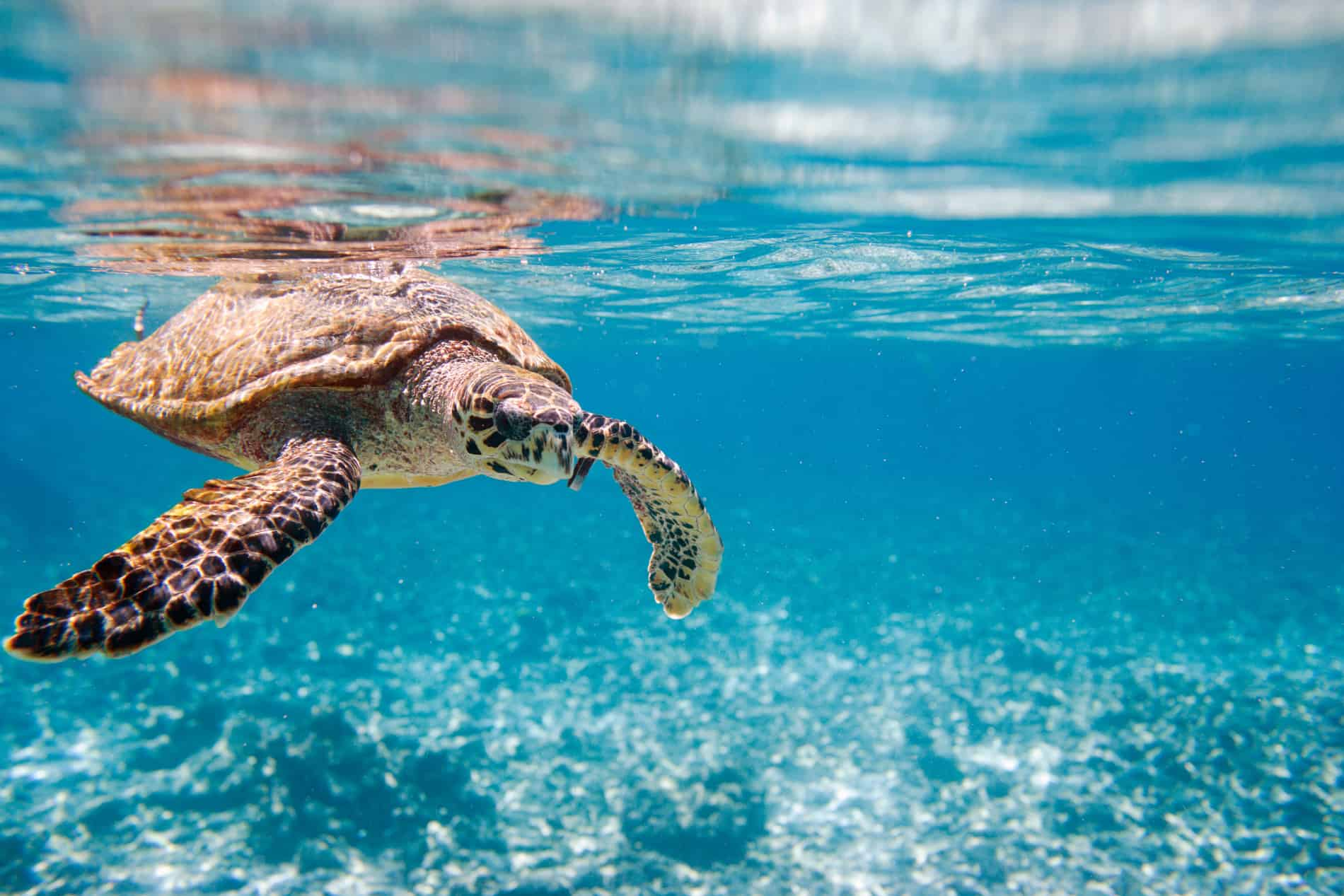 Save our sea turtles from plastic polution